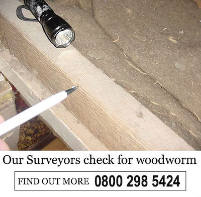 our surveyors check for woodworm (1)