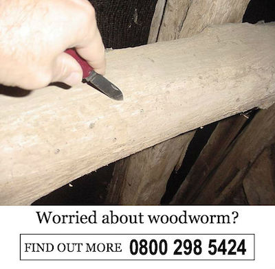 worried about woodworm